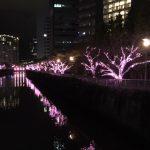 大崎目黒川ライトアップ